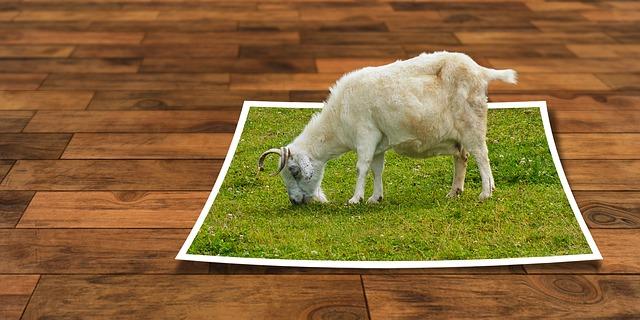 Cabra comiendo foto