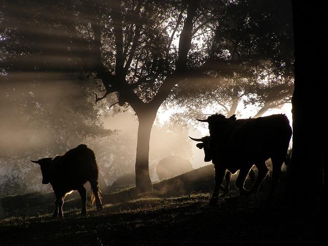 Imagen de tres toros en el campo